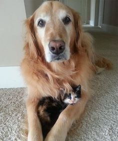 These cats and dogs are BFFs, and we're dying of cuteness