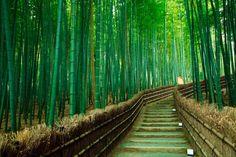 Sagano Forest. Japan
