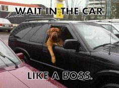 #Dog #waiting in the #car #like a #boss #LetsGetWordy