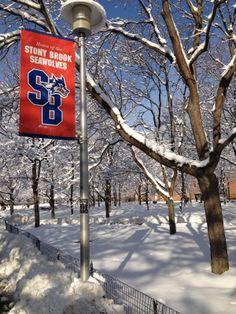 Stony Brook University SeaWolves - SBU: my alma mater Stony Brook University, Top Colleges, Alma Mater, Next Chapter, Senior Year, Home And Away, College Life, Long Island, New York