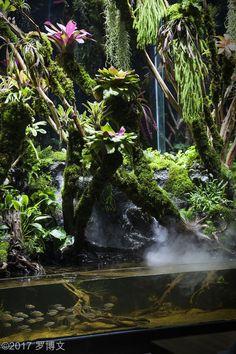Tree Frog Terrarium, Aquarium Terrarium, Nature Aquarium, Terrarium Plants, Reptile House, Reptile Room, Animal Room, Animal House, Tropical Terrariums