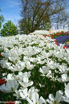 Morges Tulip Festival