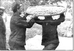 Mecidiyeköy 'de dut toplayanlar 1930 / İstanbul _