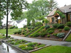 jardin en pente élégant aménagé avec des conifères et des arbustes