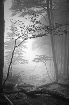 Beautiful nature photography: fog in the forest, Black & white Black White Photos, Black And White Photography, Landscape Photography, Nature Photography, Photo D Art, Dark Forest, Mists, Beautiful Pictures, Amazing Photos