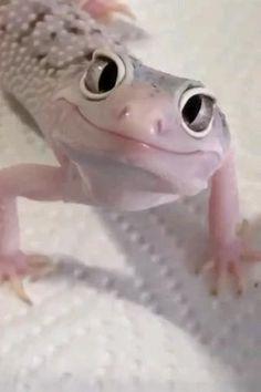 Cute Wild Animals, Pretty Animals, Cute Little Animals, Cute Funny Animals, Animals Beautiful, Beautiful Snakes, Cute Lizard, Cute Gecko, Leopard Gecko Cute