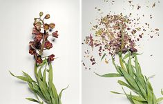Broken Flowers by Jon Shireman http://www.jonshireman.com