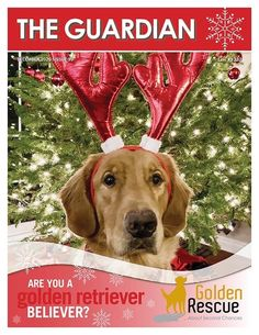 Golden Retriever Rescue, Latest Issue, The Guardian, Rescue Dogs, Adoption, Website, Reading, Swag, Heart
