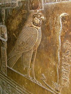 Falcon as Symbol of Horus the God of War in Temple of Hathor - Egypt