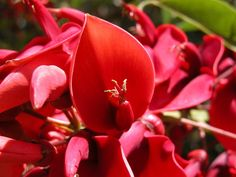 Flowers, Plants, Google Search, Red Flowers, Hummingbirds, Landscaping, Everything, Uruguay, Poems