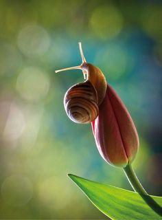 Улитка на тюльпане / Магазин маленьких радостей