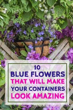 Flower Garden Growing a container garden in the shade can be a bit tricky. But with these ideas for blue flowers that do well in pots and in the shade, your walkway, patio or porch will look great all summer. Click through to find out more. Blue Plants, Tall Plants, Shade Plants, Potted Plants, Shade Perennials, Flowering Plants, Container Plants, Container Gardening, Container Flowers