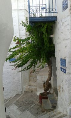 "See 116 photos and 14 tips from 912 visitors to Άνω Σύρος (Ano Syros). ""Beautiful little village on a hill top, no cars so come prepared"" Travel Around The World, Around The Worlds, Greek Life, Clouds, Memories, Beautiful, Heart, Places, Flowers"