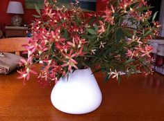 Will be heading to the flower markets to pick up some beautiful Australian Christmas Bush :)