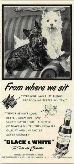 "B&w Scotch Terrier/westie ""From Where We Sit"" (1950)"