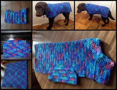 6 photos showing the dog sweater in progress and when complete and being modeled by my dark brown chocolate Lab. The sweater is made of yarn with various shades blue, red, purple, and green Crochet Dog Sweater Free Pattern, Dog Pattern, Crochet Blanket Patterns, Free Crochet, Knitting Patterns, Sweater Patterns, Dog Crochet, Irish Crochet, Sewing Patterns