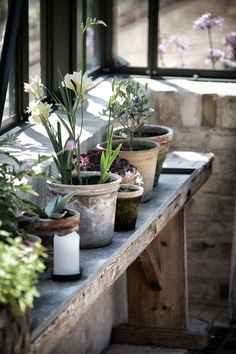 plant potting bench