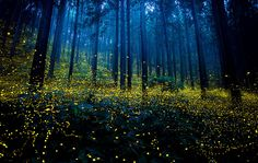Fireflies in trees by Yu Hashimoto