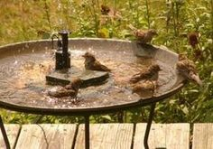 5 Hints for Operating a Solar Birdbath Fountain Solar powered fountain. Shallow, and with running water. Shallow, and with running water. Diy Water Feature, Backyard Water Feature, Ponds Backyard, Backyard Waterfalls, Garden Ponds, Koi Ponds, Bird Bath Fountain, Fountain House, Pool Fountain