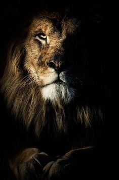 Top 10 Photos of Big Cats: Lion (Panthera Leo) Great Quotes, Me Quotes, Inspirational Quotes, Lion Quotes, Amazing Quotes, Motivational Quotes, Cool Words, Wise Words, Mundo Animal