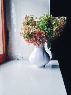 Hortensiarakkaus