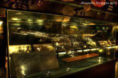 GB - London - Natural History Museum