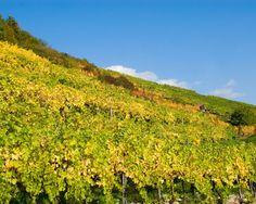 Austria Wineries
