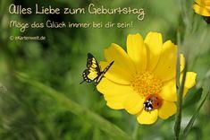 Alles Liebe zum Geburtstag. Möge das Glück immer bei dir sein! Animierte Geburtstagskarte mit einem Marienkäfer auf Sommerblume