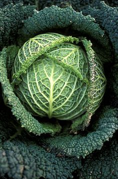 Fibonacci in Pine cone and Monkey Puzzle Tree Fruit And Veg, Fruits And Vegetables, Photo Fruit, Savoy Cabbage, Green Cabbage, Cabbage Patch, Monkey Puzzle Tree, Fractals In Nature, Patterns In Nature