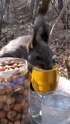 Super Cute Animals, Cute Funny Animals, Cute Baby Animals, Funny Animal Videos, Funny Animal Pictures, Happy Animals, Animals And Pets, Weird Looking Animals, Animal Captions