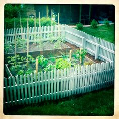 vegetable garden fence   vegetable garden fence - Google Search ...   How does your Garden Gr ...