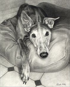 Beautiful greyhound sketch