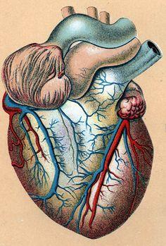 Illustration 05 + details