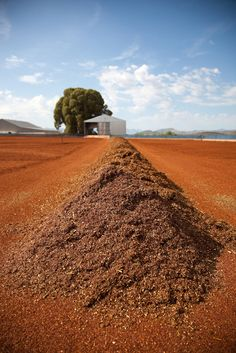 Michael van Rooyen discovers the Rooibos farms in Clanwilliam, South Africa Digital Photography, Landscape Photography, Xhosa, In And Out Movie, Out Of Africa, My Land, Homeland, Country Living, West Coast