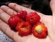 Surinam berry: Rare Fruit Seeds and Exotic Tropical Fruit Seeds