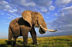 Traffico illegale di fauna selvatica: un business miliardario