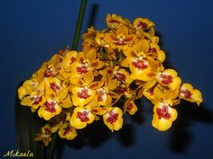 Orchids   Flickr - Photo Sharing!