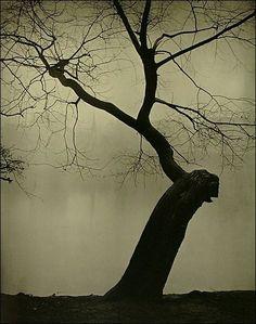 sudek | Josef Sudek