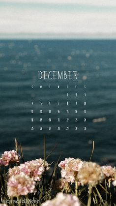 ocean and flowers Australian December calendar 2016 wallpaper you can download for free on the blog! For any device; mobile, desktop, iphone, android!