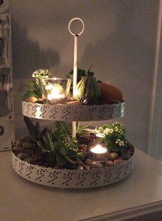 Cool kitchen plantation (Facebook)