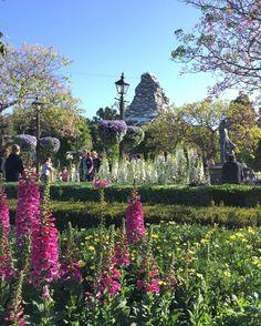 BEAUTIFUL SPRING MORNING HERE AT THE HAPPIEST PLACE ON EARTH #Disneyland #SpringTimeIsHere #SpringInDisneyland #EasterInDisneyland #Flowers #Spring #BlueSkies #AndSunshine #Disney #DisneyGram #DisneySide #DisneyBeauty #DisneyMagic #Disneyland60 #DisneylandDiamondCelebration #DisneylandAnnualPassHolder @disneyland by rachaelml016