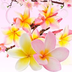 Puakenikeni Hawaiian Flower Fragrance Oil  #fragranceoil #fragranceoils #fragrance