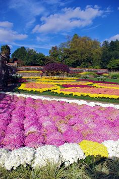 Colourfall fall mums in the Walled Garden at Biltmore House in Asheville NC...✈...北卡羅來納州阿什維爾... ...✈