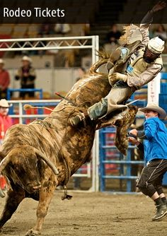 bull riding at traveling rodeos (North American??) =)