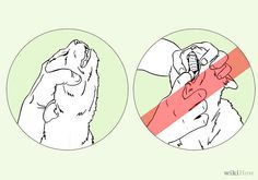 How to Save a Choking Cat: 8 Steps - wikiHow   very important to know,..could save a cat's life