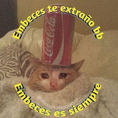Memes Amor, Dankest Memes, Cute Love Memes, Funny Love, Love Images, Funny Images, Memes Lindos, All Meme, Bts Chibi