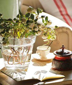 Un rayo de sol  La luz natural nos beneficia a nivel físico y emocional, tanto como a las mismas plantas.