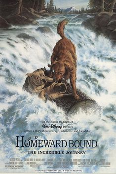 """Homeward Bound: The Incredible Journey"" (1993) - Directed by Duwayne Dunham. With Michael J. Fox, Sally Field, Don Alder, Ed Bernard. Three pets escape from a California ranch to find their owners in San Francisco."