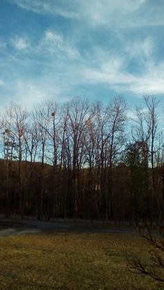 The trees with the blue clouds behind 1/5/15