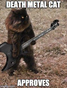 death metal meme - looks like my cat Momo - BMW Funny Animal Memes, Funny Animal Pictures, Cat Memes, Funny Cats, Funny Animals, Cute Animals, Funny Humor, Death Metal, Crazy Cat Lady